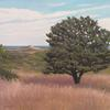 Highhead Pine 12 x 12 Oil on Canvas